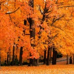 discover fall trees