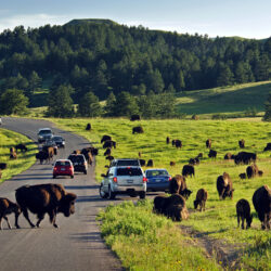 Top Reasons to Visit Custer State Park this Summer