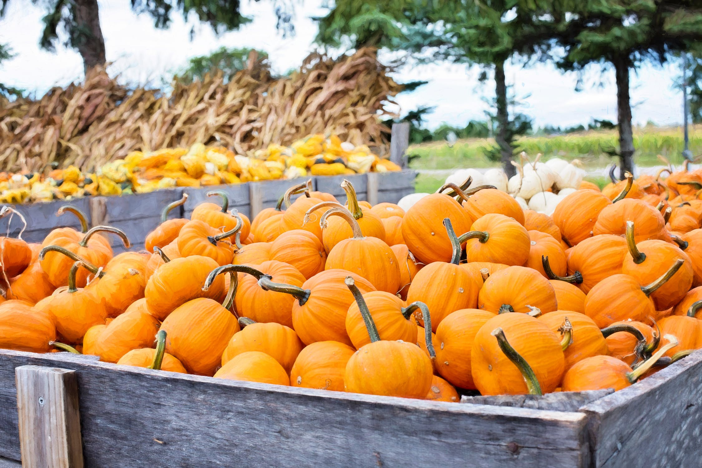Happy Fall Y'all $25 Amazon Gift Card Giveaway